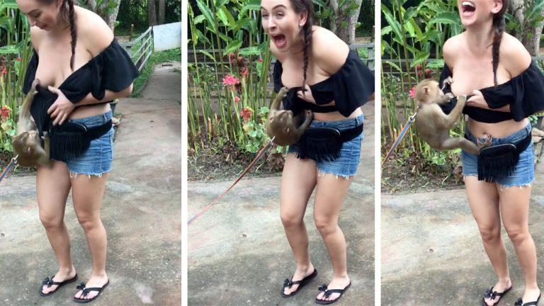 brazilian with girl fucked Monkey