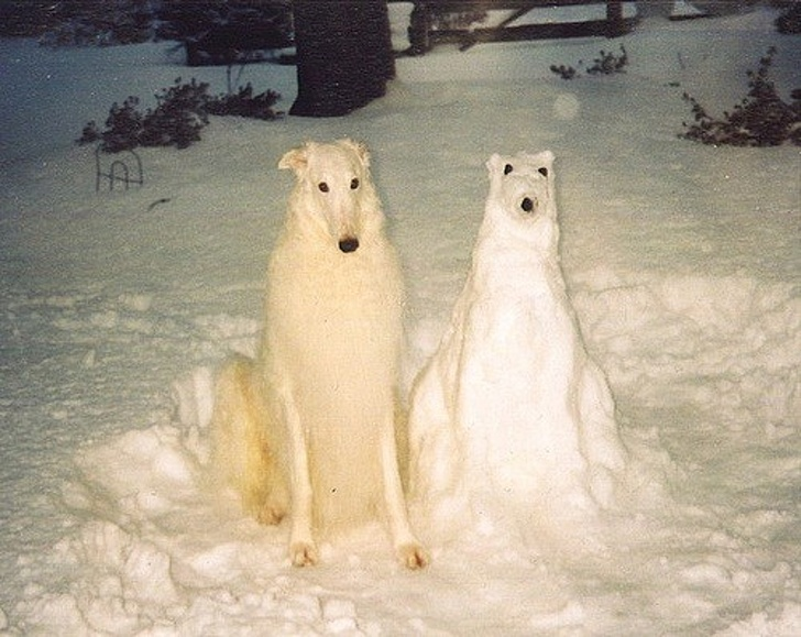 8978560-Snowdog-1545340693-728-90ff5bd3aa-1547114958